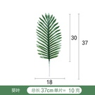 NHAH1809637-Green-sunflower-leaves